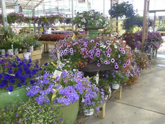 Browse our Greenhouses