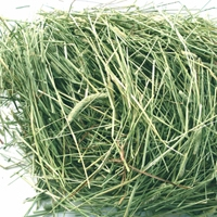 Oxbow Western Timothy Hay 50 lbs