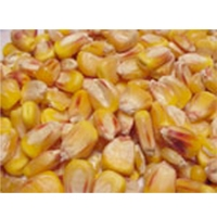 Scarlett Coarse Cracked Corn 50LB