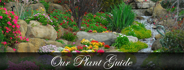 Beau Garden Center In Farmingdale, NY