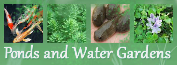 We Have A Plethora Of Fish, Fish Food, Plants And Other Creatures To  Populate Your Pond. If You Own A Pond Or Water Garden In Nassau Or Suffolk  Counties, ...