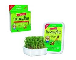 Gimborn Single Cat Grass Plus (60 grams) Tub