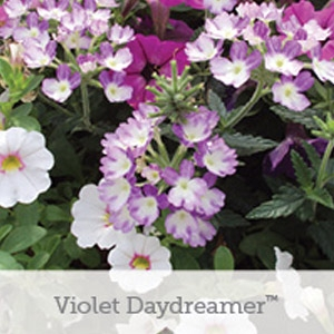 HGTV Friendly Fusions™ Violet Daydreamer Flowering Basket