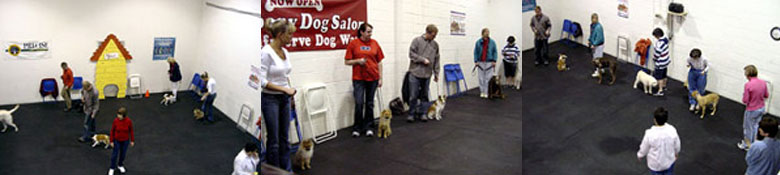 image of dog obedience class