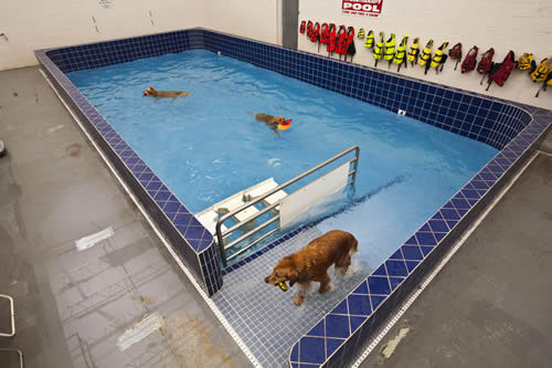 Hydrotherapy jj pet depot pet depot is located in timonium maryland and offers quality pet supplies organic and holistic cat and dog food self serve dog washing stations solutioingenieria Choice Image