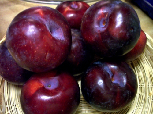 Locally Grown Plums