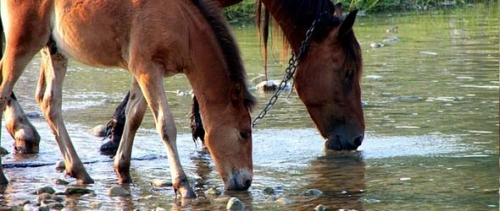 Stimulating Your Horse's Thirst