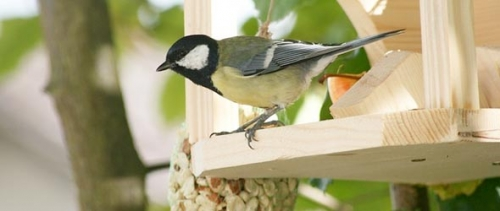 Bird Feeder Sale