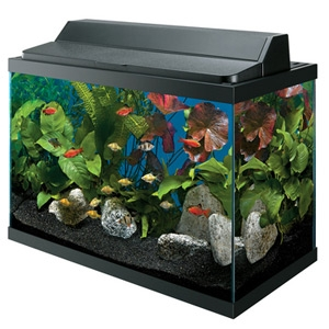 Aqueon 10 Gallon Deluxe Aquarium Kit