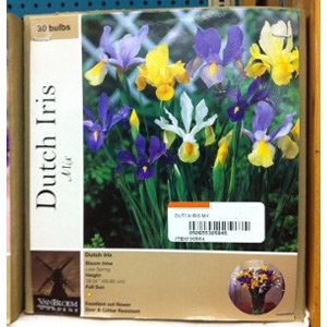 Van Bloem Gardens Dutch Iris Mix