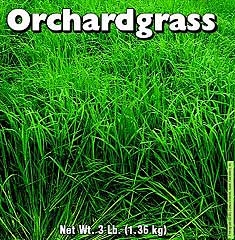Orchardgrass 3 Lb