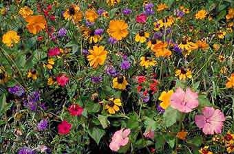 Wildflower Low Ground 8oz