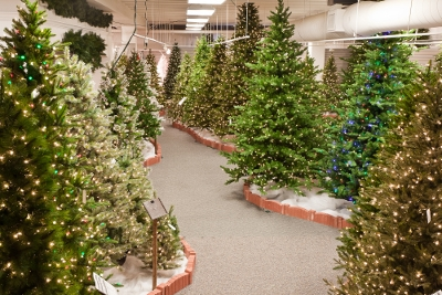 Assorted Direct Export Life-Like Christmas Trees