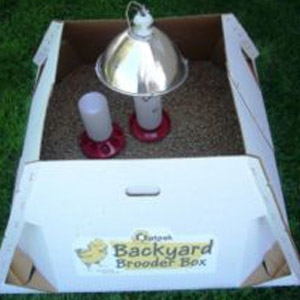 Outpak Backyard Chick Brooder Box