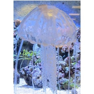 Floating Jellyfish Clear Large