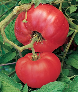 Red 'Brandywine' Heirloom Tomato