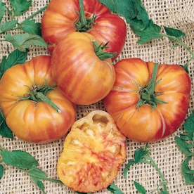 'Pineapple' Heirloom Tomato