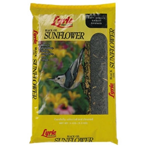 Blackoil Sunflower Seed