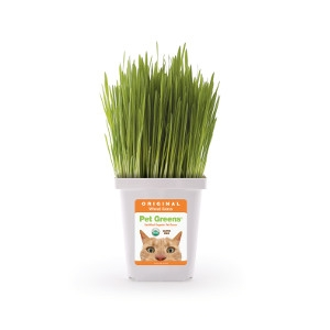 Pet Greens® Live Pet Grass, Original Wheat Grass