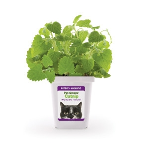 Pet Greens® Live Catnip