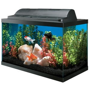 Basic Aquarium Kit