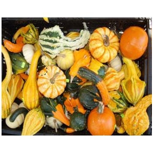 Locally Grown Winter Squash
