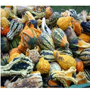 Locally Grown Gourds