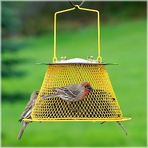 Perky-Pet NO/NO® Sunflower Basket Wild Bird Feeder