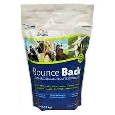 Bounce Back Multi-Species Electrolyte Supplement 4lb