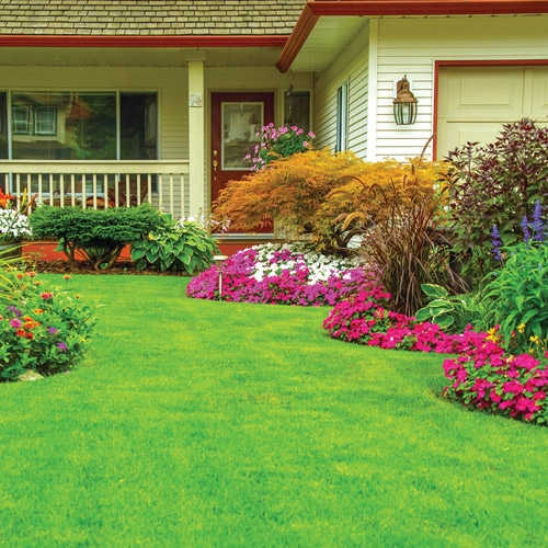 Attractive Lawn Care