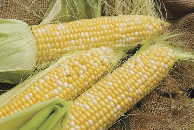 Locally Grown Sweet Corn