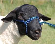 35-7841 BL/BK Weaver Leather Poly Rope Sheep Halter 4' Hurricane