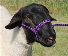 35-7841 P/BK Weaver Leather Poly Rope Sheep Halter 4' Purple/Black