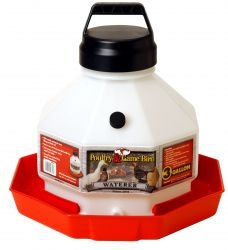 Little Giant 3 Gallon Plastic Poultry Waterer