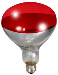 Little Giant 250 Watt Red Bulb For Brooder Lamp