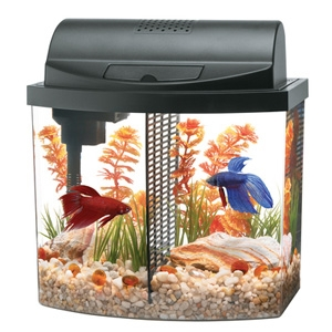 Aqueon Betta Bow Aquarium Kit, 2.5 Gallons