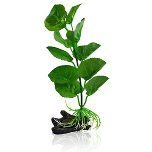Betta Plant Pennywort - One Size