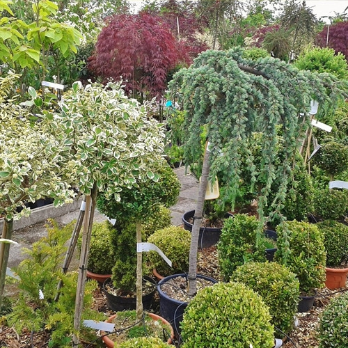 Select Nursery Stock - 50% OFF!