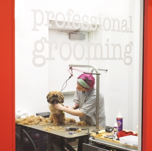 Professional Grooming