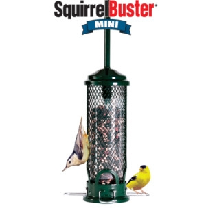 Brome Bird Care Mini Squirrel Buster