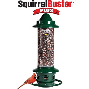 Brome Bird Care Squirrel Buster Plus