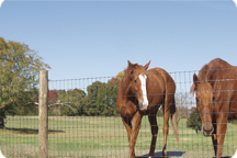 Horse Fence, 60 in. x 100 ft.
