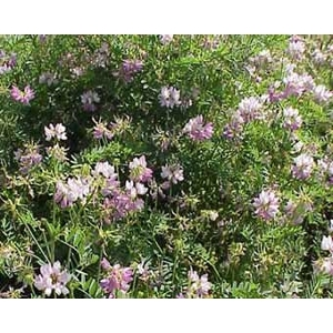 Vetch Crown 1 Pound