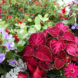 Annuals Grow Quickly And Fill Your Garden Window Bo Baskets Or Containers With Blossoms From Spring Until Fall Annual Plants Come In A Myriad Of