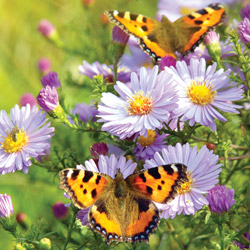 Hummingbird & Butterfly Plant List