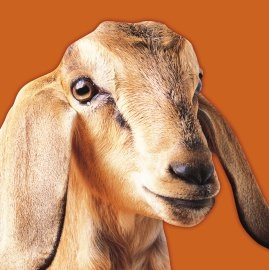 The Circular Health Check for Goats