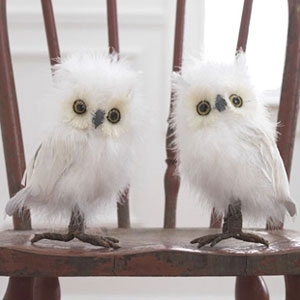 RAZ Feathered Owls