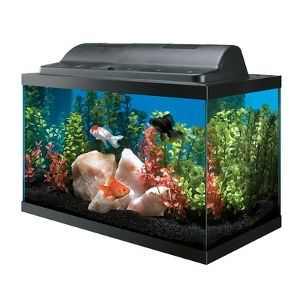 10 Gallon Basic Aquarium Kit